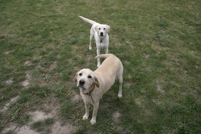 Photo of my two security guards, Ralph & Millie (my dogs).